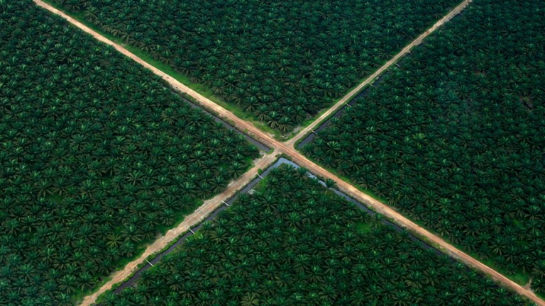 An aerial view shows a palm oil plantation in South Sumatra province, October 16, 2010.